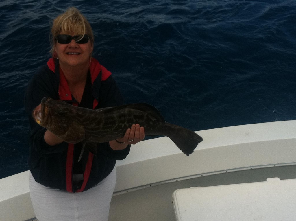 black grouper