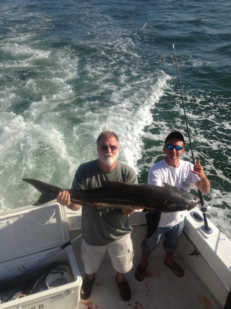 Cobia just caught in Ft Lauderdale