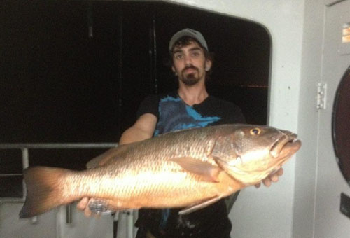 cubera snapper at night