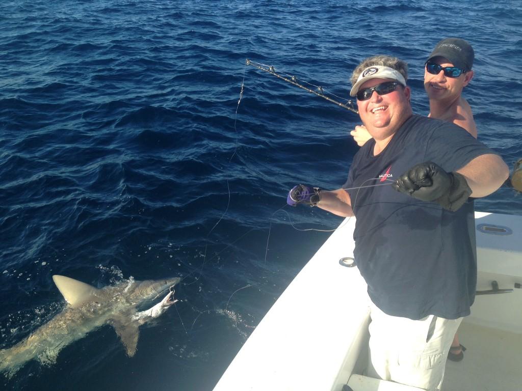 Shark near the boat