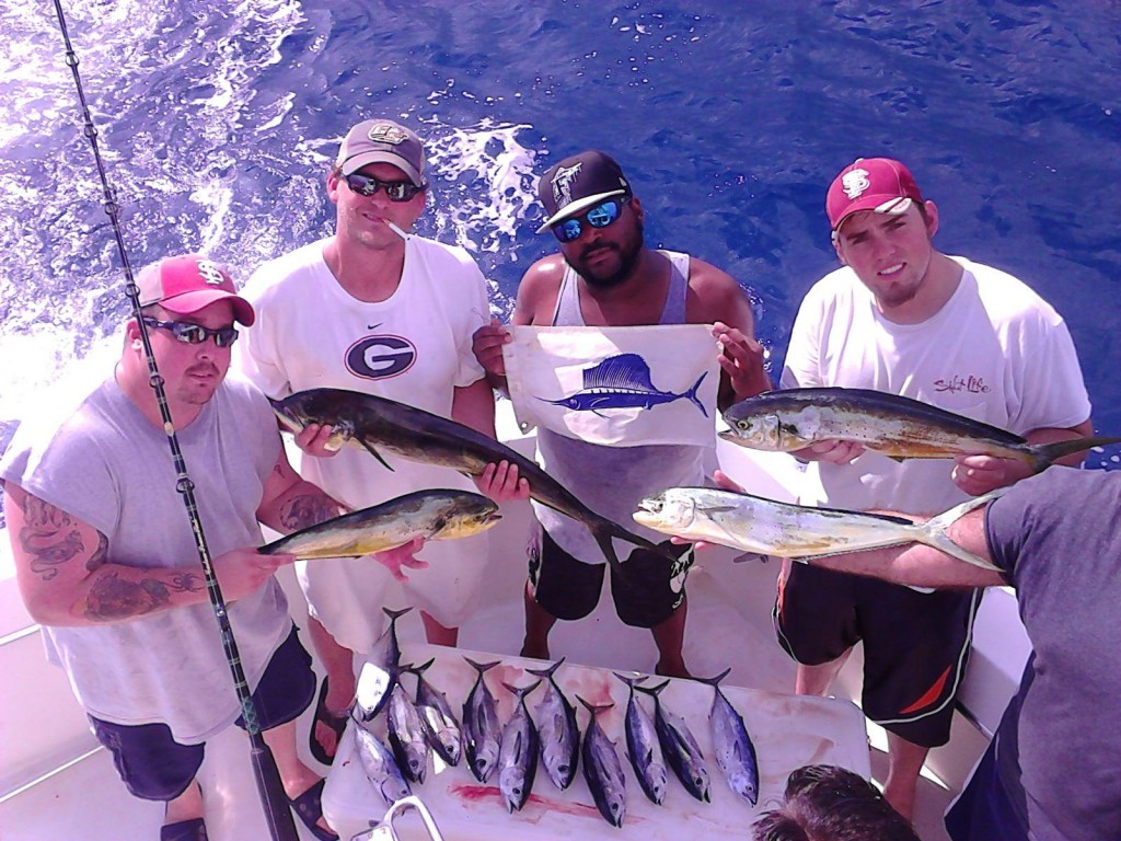 Sailfish, dolphin and tunas