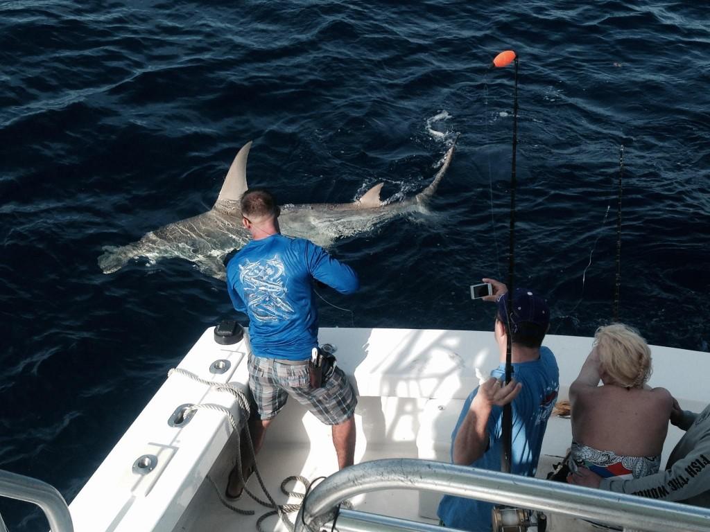 Monster Hammerhead shark next to the boat