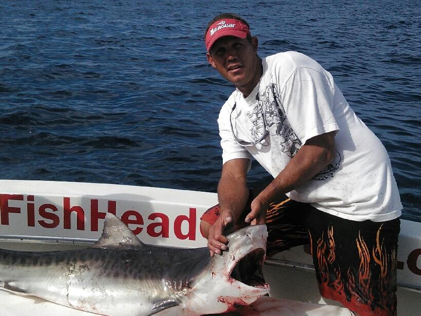 Nice tiger shark caught and released