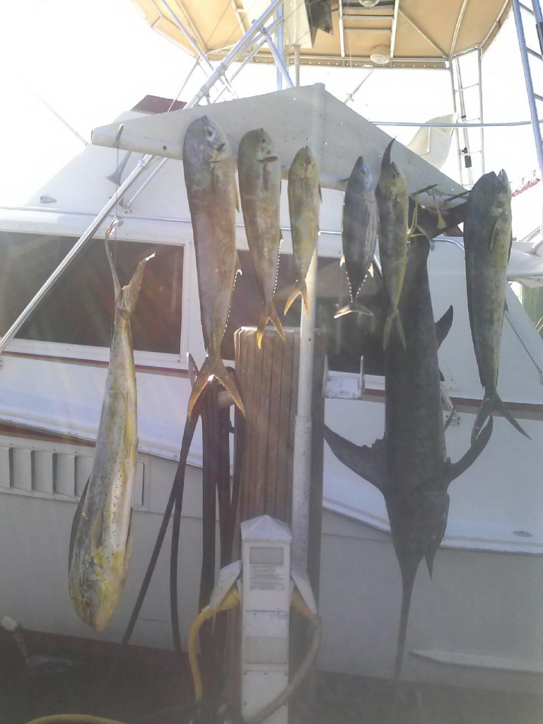 good daytime swordfishing catch of dolphin and swordfish