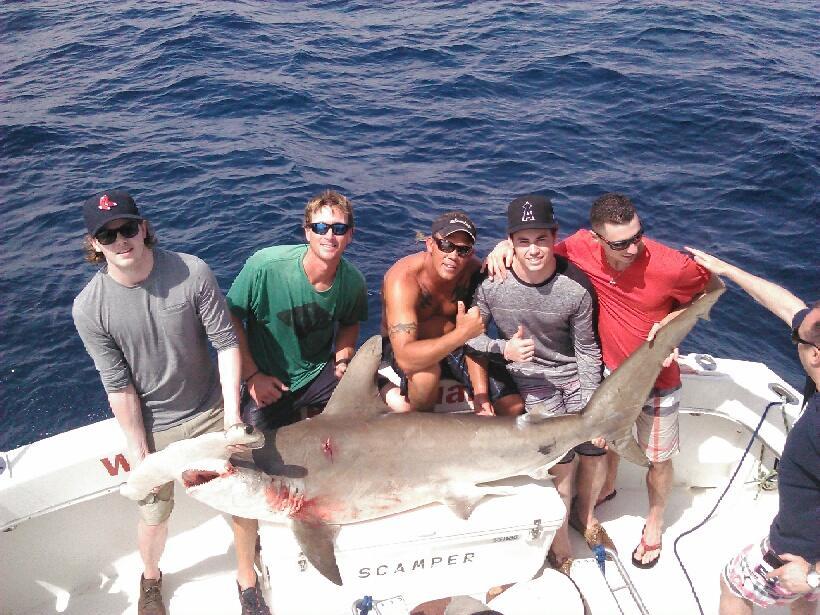 Nice hammerhead shark in the boat