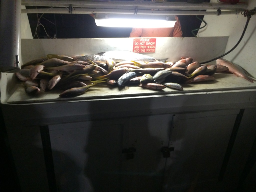 Nice catch of snappers at night