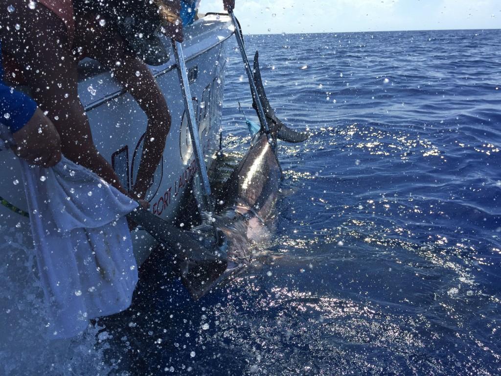 Hauling the swordfish into the boat.