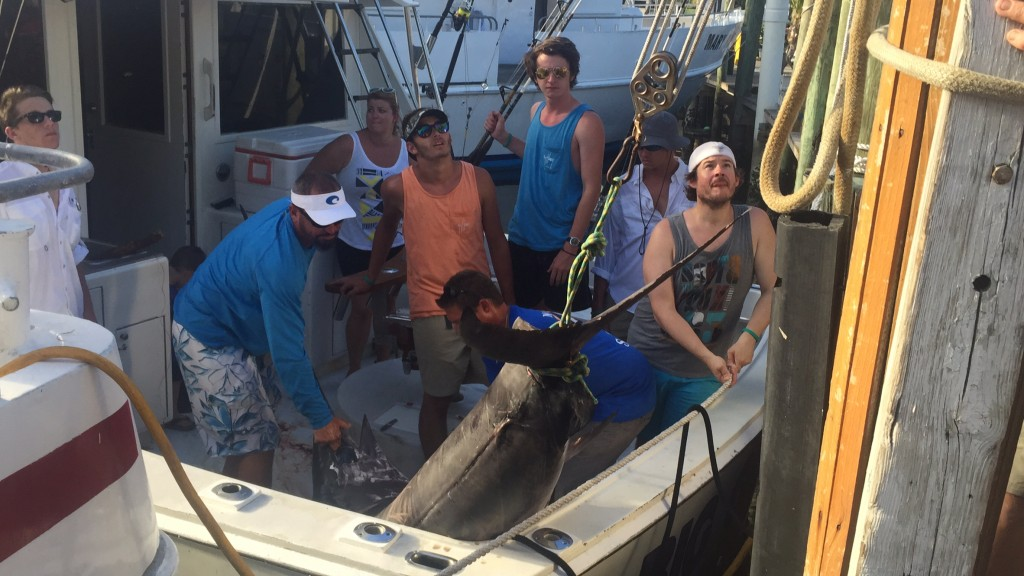 pulling the swordfish up onto the dock