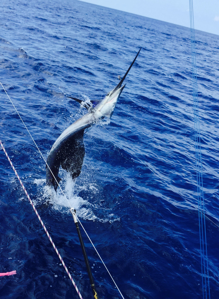 Sailfish jumping straight up out of the water next to the boat