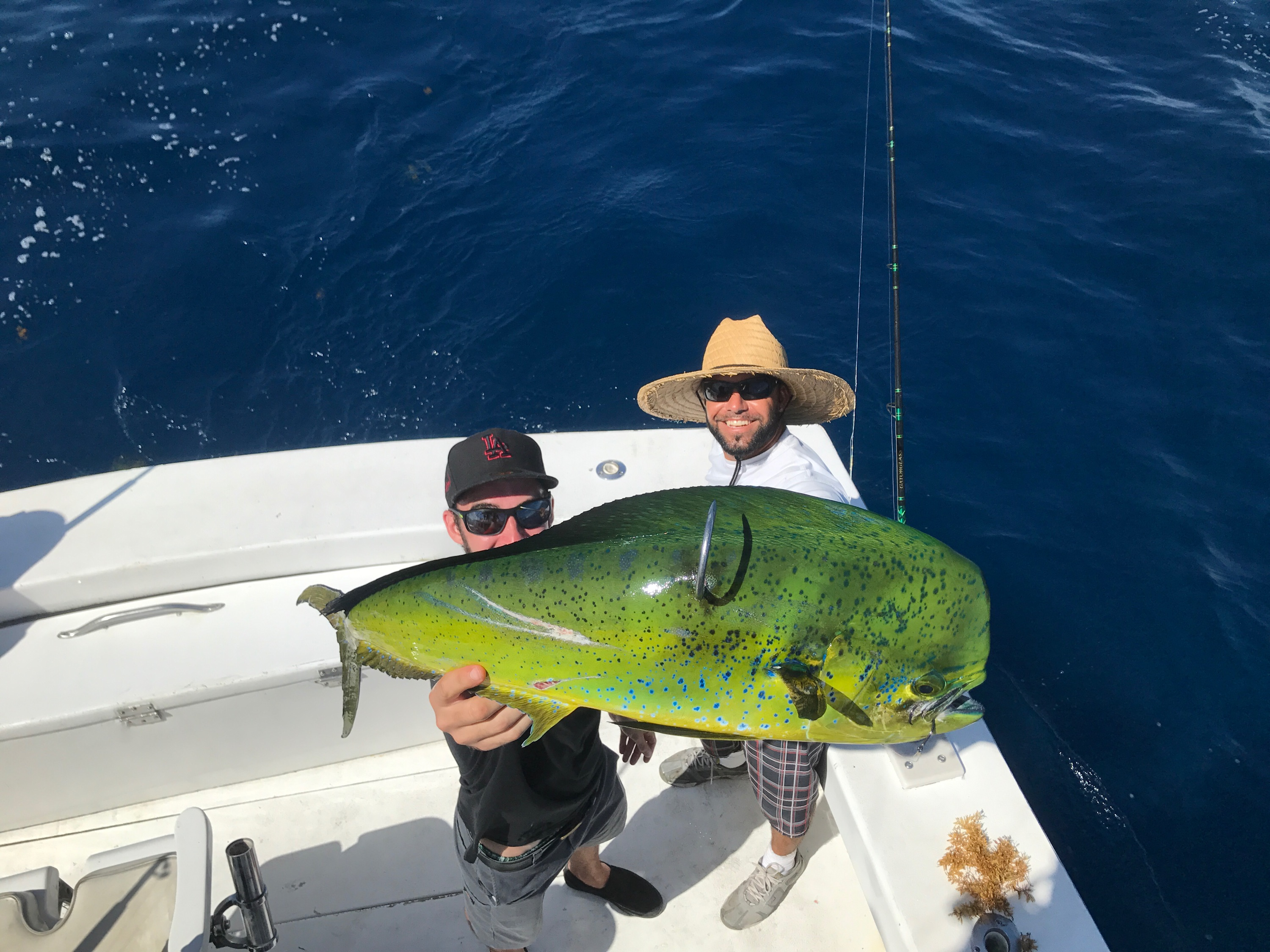 Great fort lauderdale fishing this week for Fishing spots in fort lauderdale
