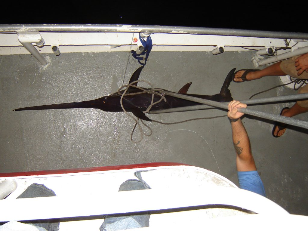 Swordfish on the deck of the Catch My Drift, our second one of the night.