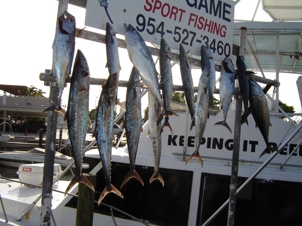 Lots of fish hanging on the rack after our sportfishing charter