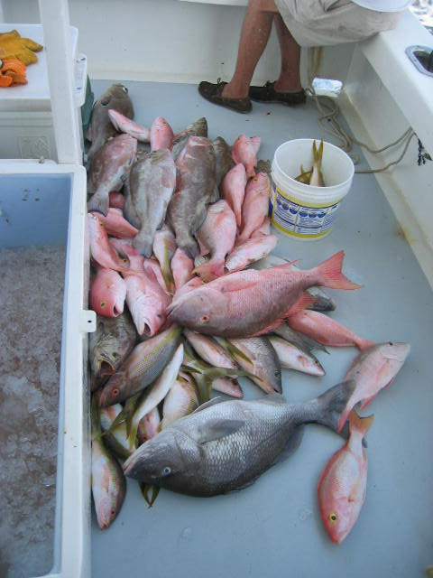 Pile of snappers and groupers laid out on the deck of the boat