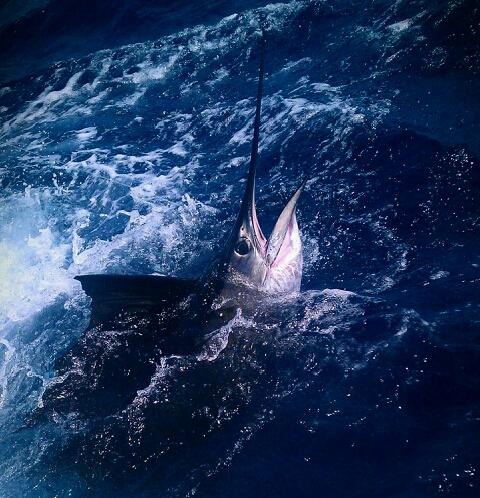 Sailfish jumping behind the boat