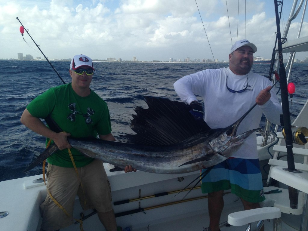 Nice sailfish just caught
