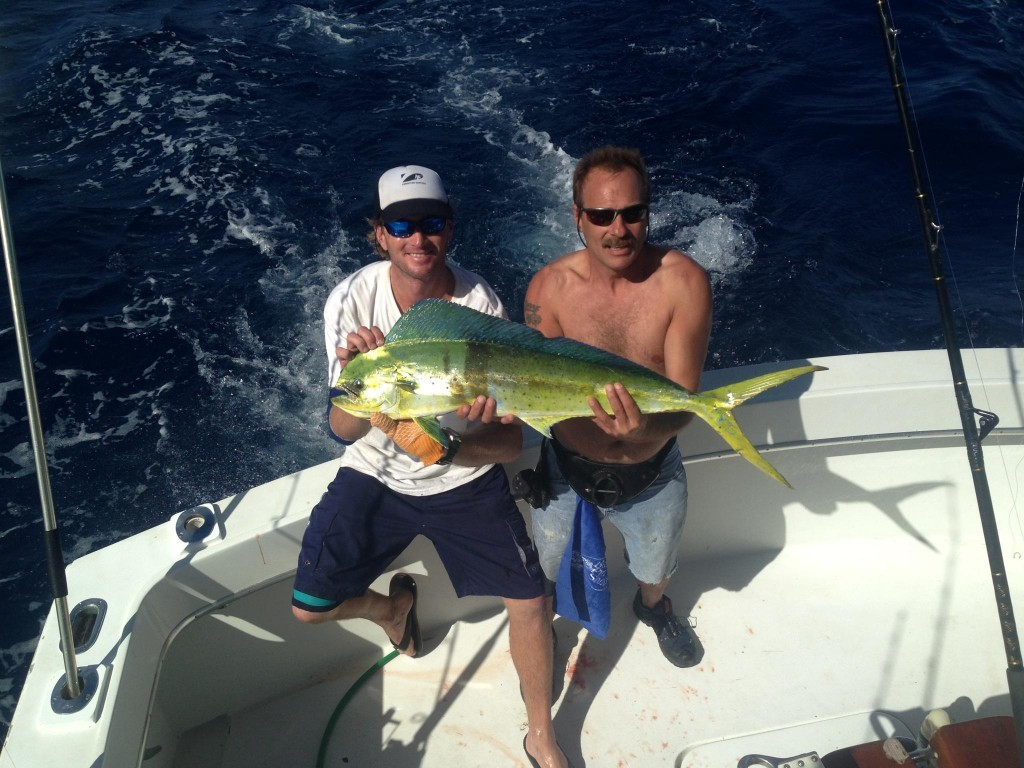 Nice dolphin caught trolling in 140ft of water, just off Fort Lauderdale beach.