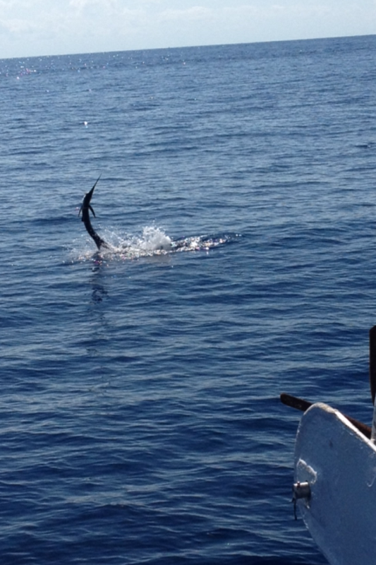 Nice sailfish jumping next to the boat