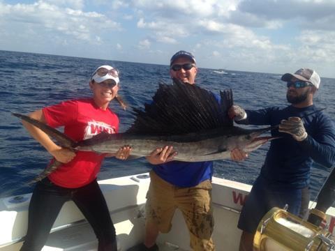 nice sailfish just caught