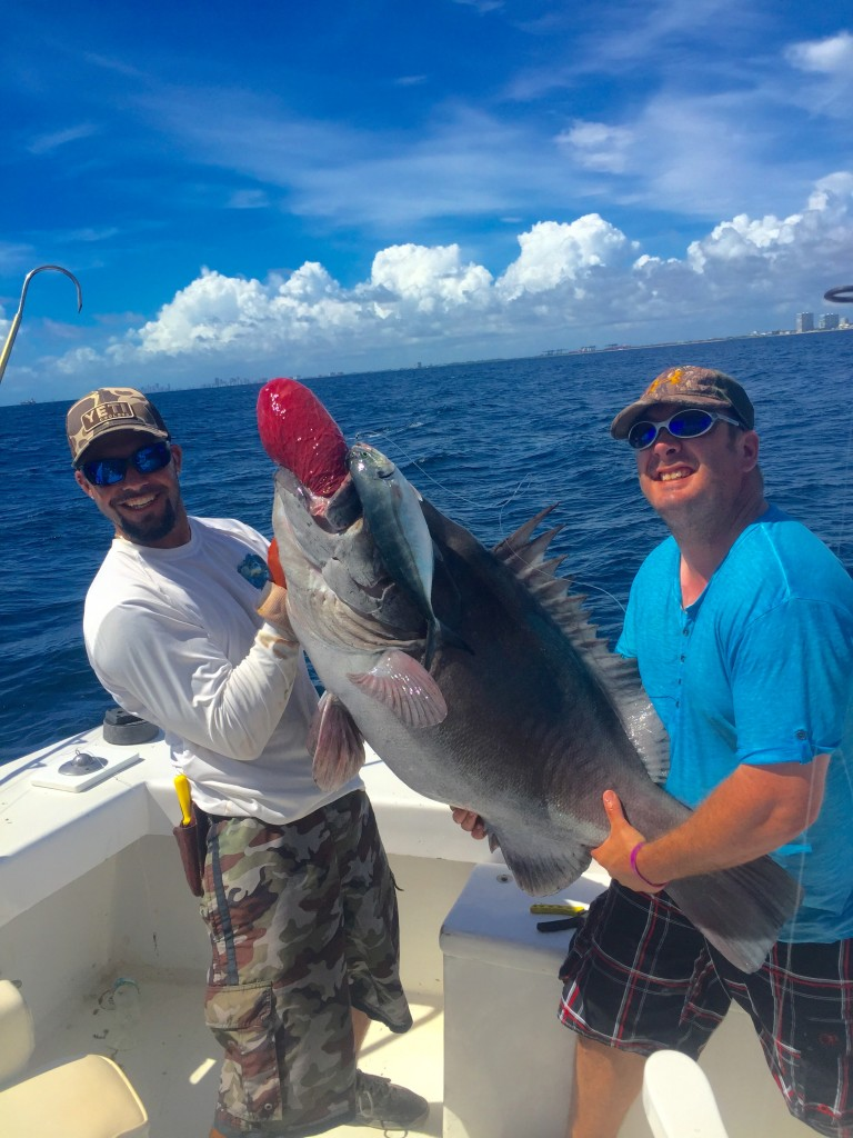 Big warsaw grouper