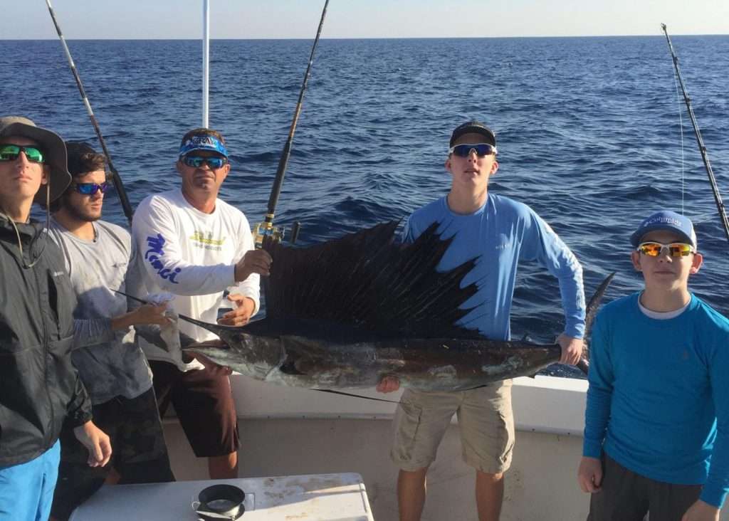 Nice sailfish just caught on a fishing charter.