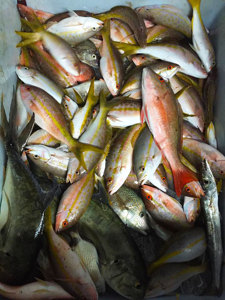 Our fish box, full of snappers, grunts, porgies, yellowtail and muttons all piled high.